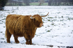 Wintermantel Lizenzfreies Stockfoto