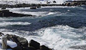 Wintermeerblick Neufundland-Küstenlinie stockbild