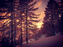 Wintermoments Fotografia Royalty Free