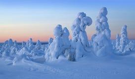 Wintermorgen Lizenzfreie Stockfotos