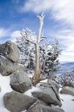 Wintermorgen Lizenzfreie Stockfotografie
