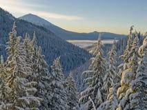 Wintermorgen stockfotos