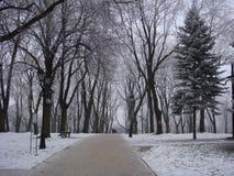 Wintermorgen in einem schneebedeckten Park Lizenzfreies Stockbild
