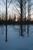 Wintermorgen im Holz Lizenzfreie Stockbilder