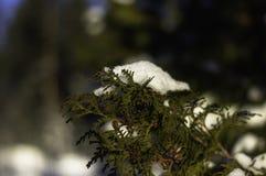 Wintermorgen Schweden lizenzfreie stockbilder