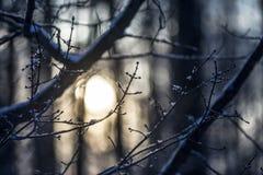 Wintermorgensonne Stockfoto