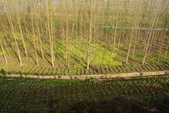 Wintermorgensonnenlicht auf bebautem Ackerland und Bäumen Lizenzfreie Stockbilder