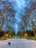 Wintermorning på parkerar arkivbild