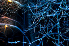 Winternachtbäume im Eis Stockfotografie