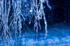 Winternachtbäume im Eis Stockbilder