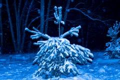 Winternachtbäume im Eis Lizenzfreie Stockfotos