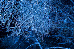 Winternachtbäume im Eis Stockbild