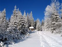 Winternatur Lizenzfreie Stockfotos