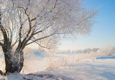 Winternatur Stockfotografie