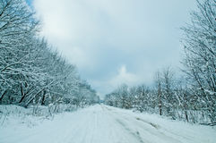 Winternatur stockfotos