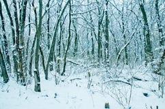 Winternatur Stockfoto