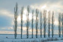 Winternatur Lizenzfreies Stockfoto