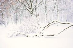 Winternaturhintergrund, Landschaft Winterwald, Park mit schneebedeckten gefallenen Bäumen Schlechtes Wetter des Winters, Sturm, B stockfotografie