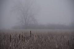 Winternebel Stockbild