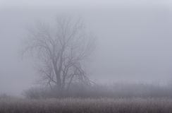 Winternebel Lizenzfreie Stockfotografie