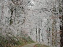 Winternebel in einem Wald mit hohen Bäumen in Deutschland Tau bereift auf dem Holz während eines kalten Wochenendes lizenzfreie stockbilder