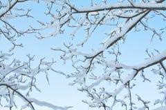 Winterniederlassung Stockbilder