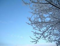 Winterniederlassung auf blauem Hintergrund Stockfoto