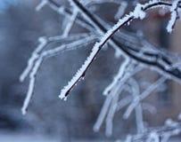 Winterniederlassung eines Baums mit Reif und Schnee Lizenzfreie Stockfotos