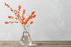 Winterniederlassung mit Beeren im Glasvase auf weißem Wandhintergrund Lizenzfreie Stockbilder