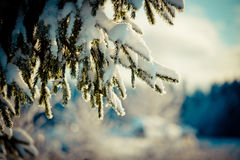 Winterniederlassung umfasst mit Schnee Stockbild