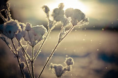 Winterniederlassung umfasst mit Schnee Lizenzfreies Stockfoto