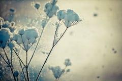 Winterniederlassung umfasst mit Schnee Lizenzfreie Stockfotos