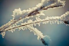 Winterniederlassung umfasst mit Schnee Lizenzfreie Stockbilder