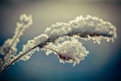 Winterniederlassung umfasst mit Schnee Lizenzfreies Stockbild