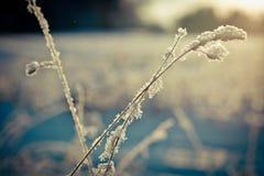Winterniederlassung umfasst mit Schnee Stockfotografie
