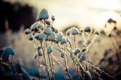 Winterniederlassung umfasst mit Schnee Stockfotos