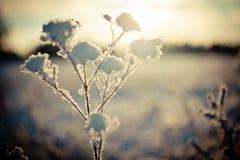 Winterniederlassung umfasst mit Schnee Stockfoto