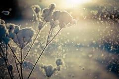 Winterniederlassung umfasst mit Schneefall lizenzfreies stockbild