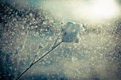 Winterniederlassung umfasst mit Schneefall stockfotografie