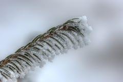 Winterniederlassungsnahaufnahme Stockfotografie