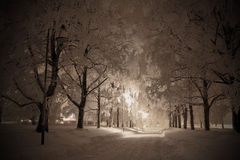 Winternight Royalty Free Stock Image