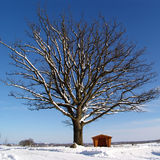 Winteroak Stock Images