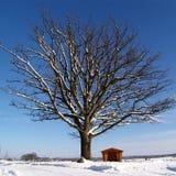 winteroak imagenes de archivo