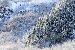 Winterpanorama mit plattierten Wäldern des Schnees Stockfotos