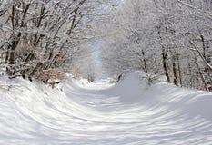 Winterpark stockbilder