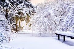 Winterpark in der Weihnachtszeit Stockfoto
