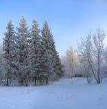 Winterpark. Eisige Bäume gegen blauen Himmel Lizenzfreies Stockfoto