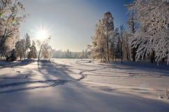 Winterpark im Schnee stockfotos