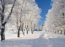 Winterpark im Schnee stockfotografie