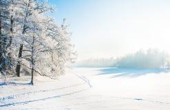 Winterpark im Schnee lizenzfreies stockbild